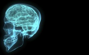 blue brain-001-1172516